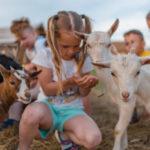 malé dievčatko kŕmi zvieratká na farme